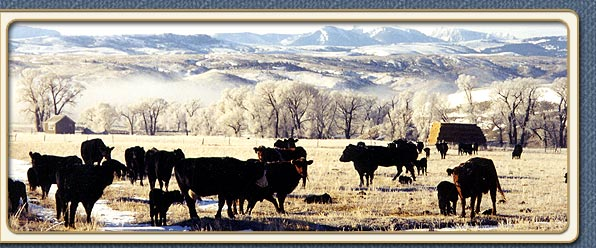 Working Montana Ranch Vacations - Crazy Mountain Cattle Company